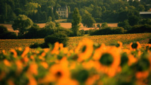 Chateaupeyredon